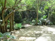 Welchman Hall Gully als ein Vertreter der natürlichen Attraktionen in Barbados