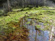 Der wunderschöne Tyresta Nationalpark im Süden von Stockholm