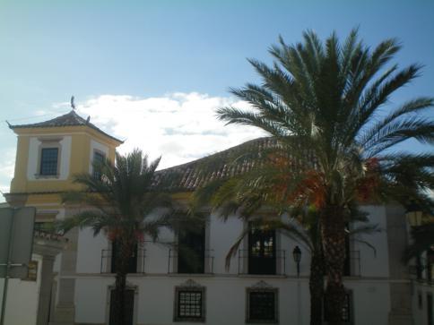Palmen in Faro am Praca Alexandre Herculano