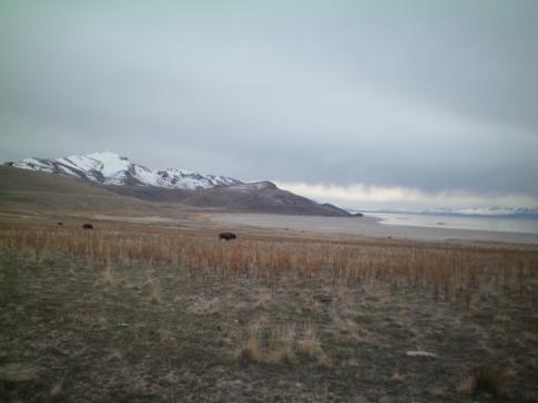 Antelope Island, Naherholungsgebiet nur 1 Stunde von Salt Lake City entfernt