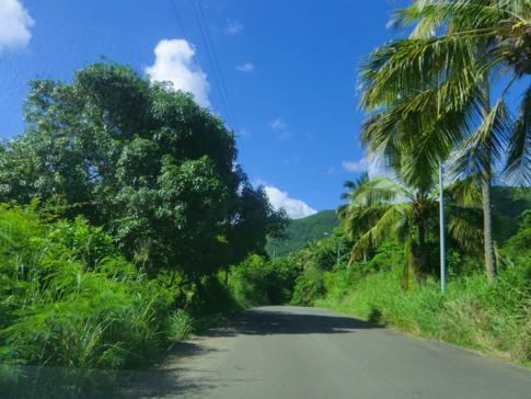 Der Fig Tree Drive, nicht unbedingt eine Top-Attraktion in Antigua