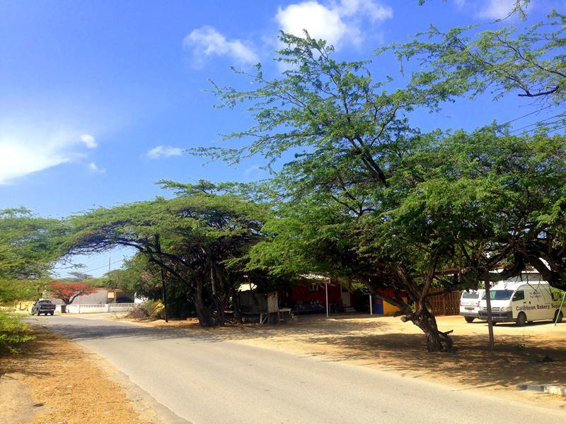 Ein typisches Foto für die Trockenheit auf Aruba