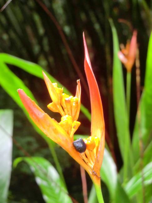 Die üppige Flora und Fauna im Welchman Hall Gully