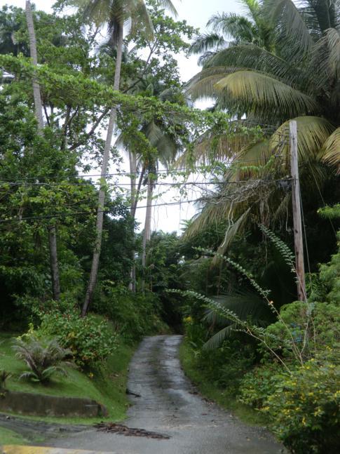 Die Zugangsstraße zum Flower Forest in Barbados