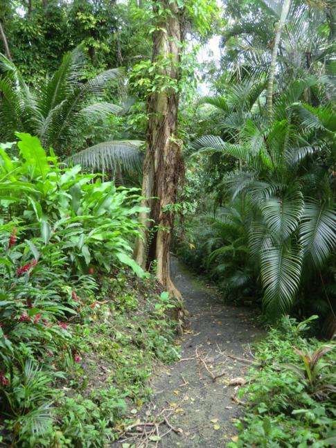 Der Weg durch dichten Regenwald statt üppige Blütenpracht