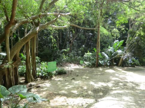 Der Welchman Hall Gully im Inneren von Barbados