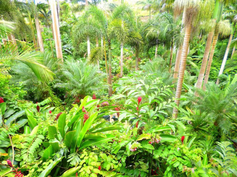 Hunte's Garden (Barbados) – botanisches Meisterwerk auf kleinstem Raum