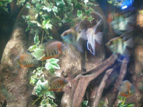 Das Aquarium im Blackpool Tower