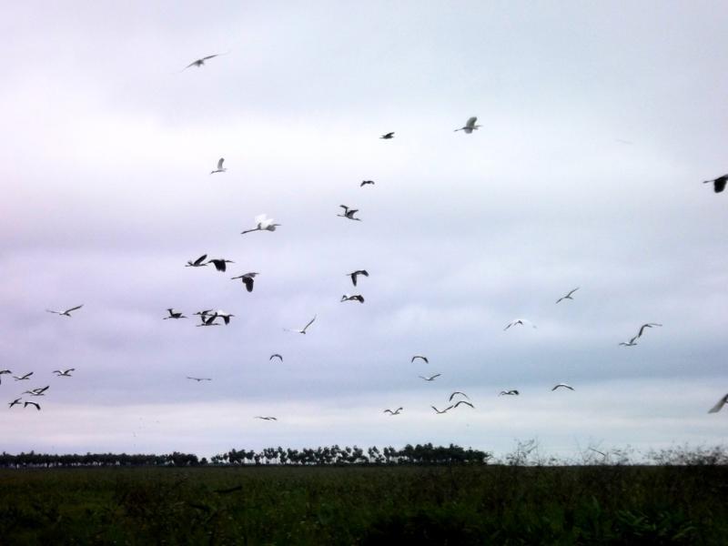 Das Pantanal von Bolivien