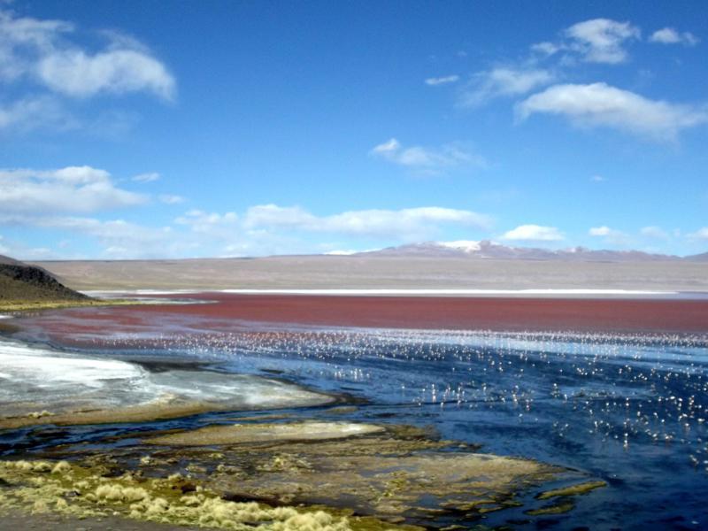 Die Laguna Colorada in der Salar de Uyuni in der Nähe der chilenischen Grenze
