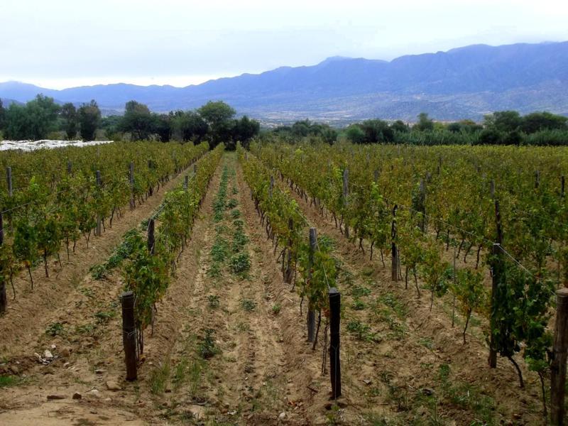 Das Weindorf El Valle de la Concepcion in der Nähe von Tarija