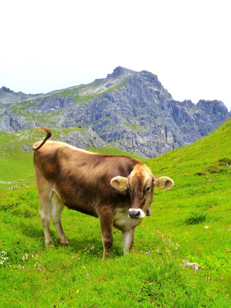 Schöne Weiden am Fuße des Großen Widderstein