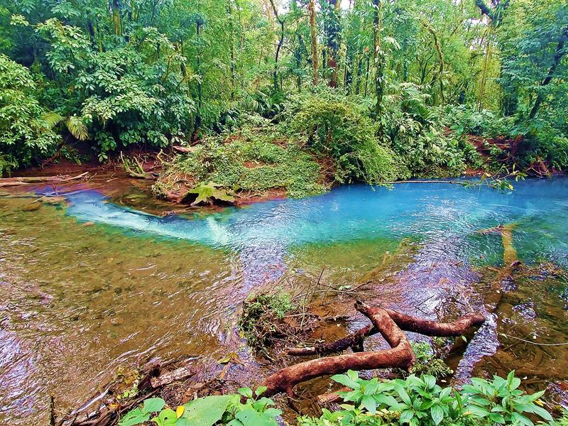 Der Rio Celeste an seinem Urspung im Tenorio National Park in Costa Rica