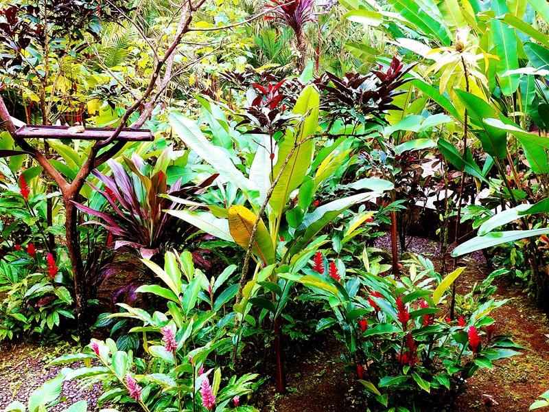 Traumhafte Natur in Costa Rica - auch im Rio Celeste Hideaway Hotel