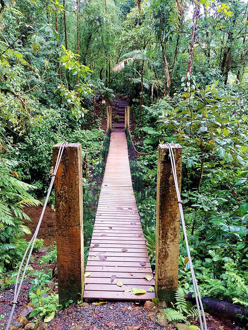 Der Weg zum Rio Celeste im Rio Celeste Hideaway Hotel