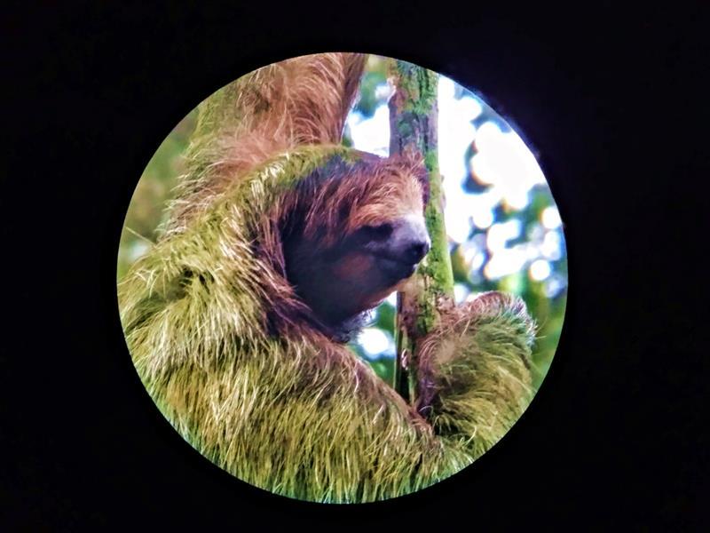 Tierbeobachtung in Bijagua - die volle Vielfalt Costa Ricas