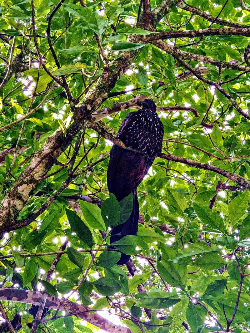 Unsere Tierbeobachtung in der Finca Verde Eco-Lodge in Bijagua