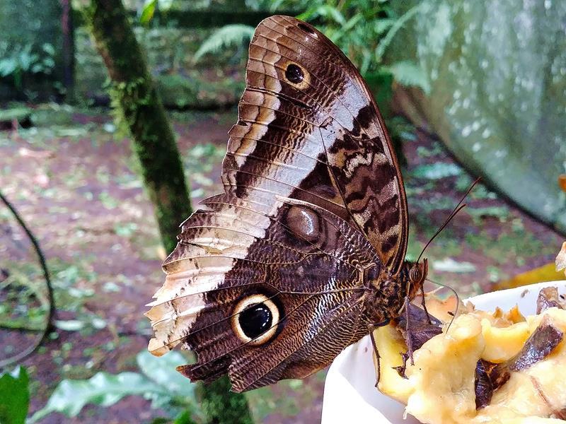Schmetterlingsgarten in der Finca Verde Eco-Lodge in Bijagua nahe dem Tenorio National Park