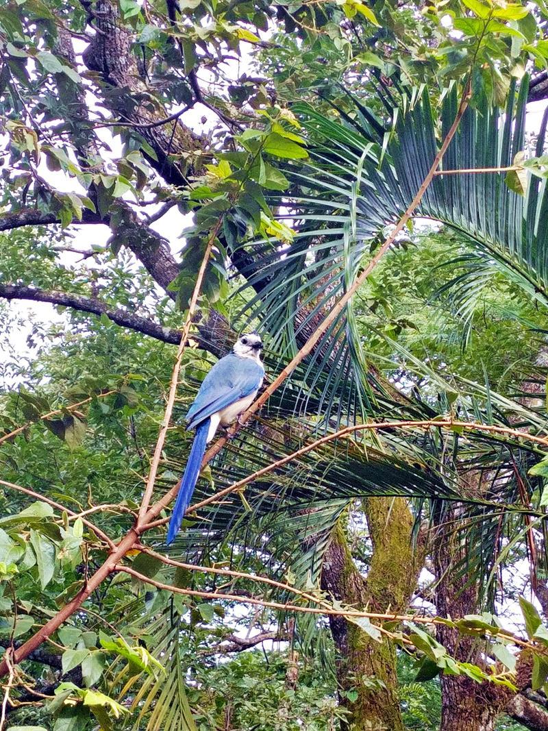 Ein weiterer Vogel im Rincon de la Vieja National Park in Costa Rica