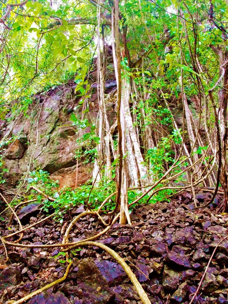 Das Refugio de Vida Silvestre Cueva Murcielago nahe Santa Teresa auf der Nicoya-Halbinsel