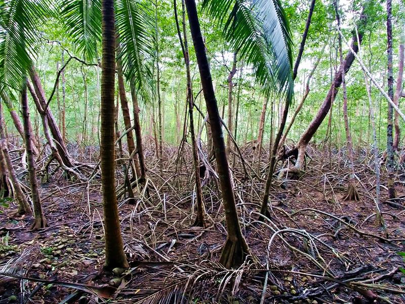 Das Curu Natur-Reservat auf der Nicoya-Halbinsel