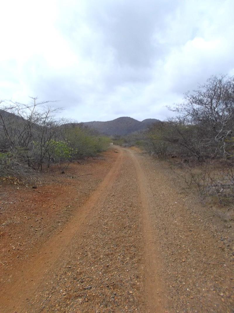 Wespunt im Norden von Curacao