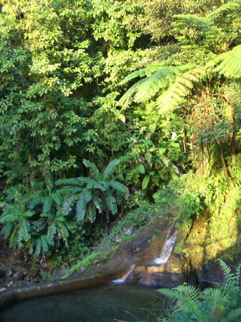 Ti Tou Gorge in Dominica