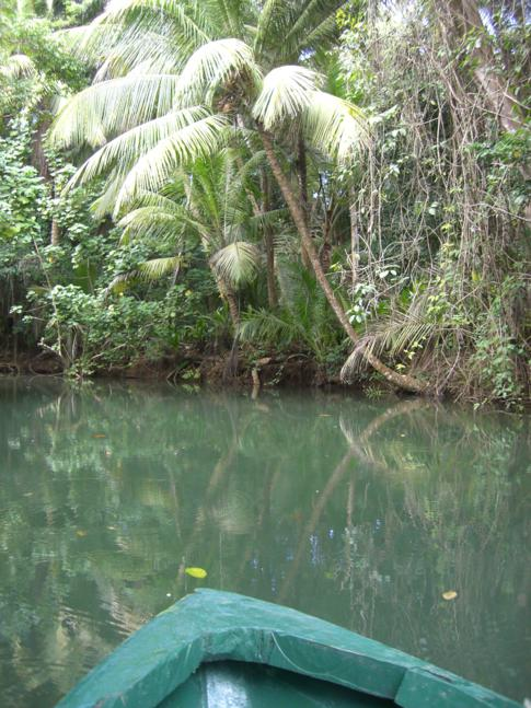 Die Idylle des Indian River in Dominica