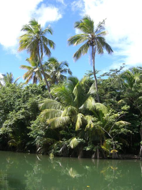 Typisches Bild am Indian River - hier wurde auch ein Teil von Fluch der Karibik gedreht