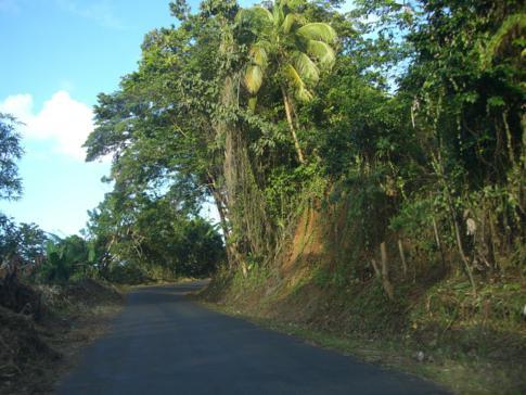 Typische Straße in Dominica mit ganz viel Vegetation links und rechts