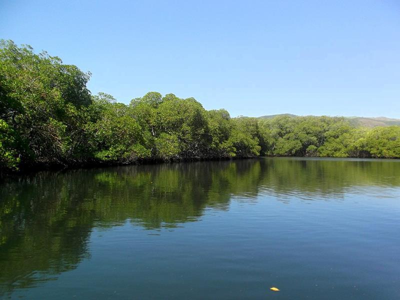 Besuch in den Mangroven auf dem Weg von Cayo Arena zurück nach Punta Rucia