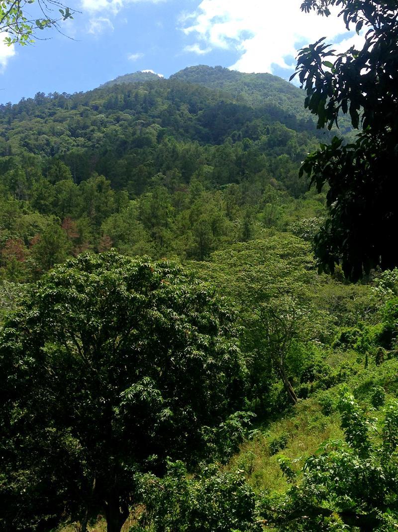 Blick auf den Mogote von Jarabacoa aus