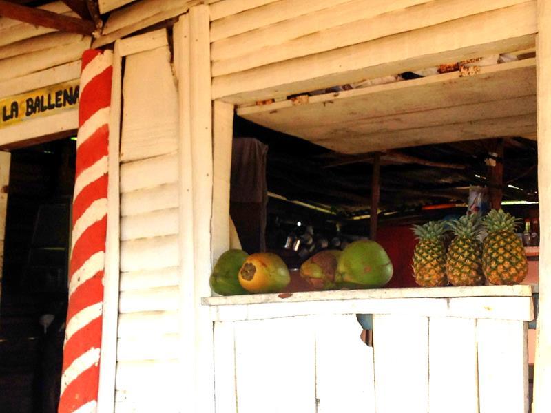 Kokosnuss und Pina Colada an einer Bar am Playa El Valle