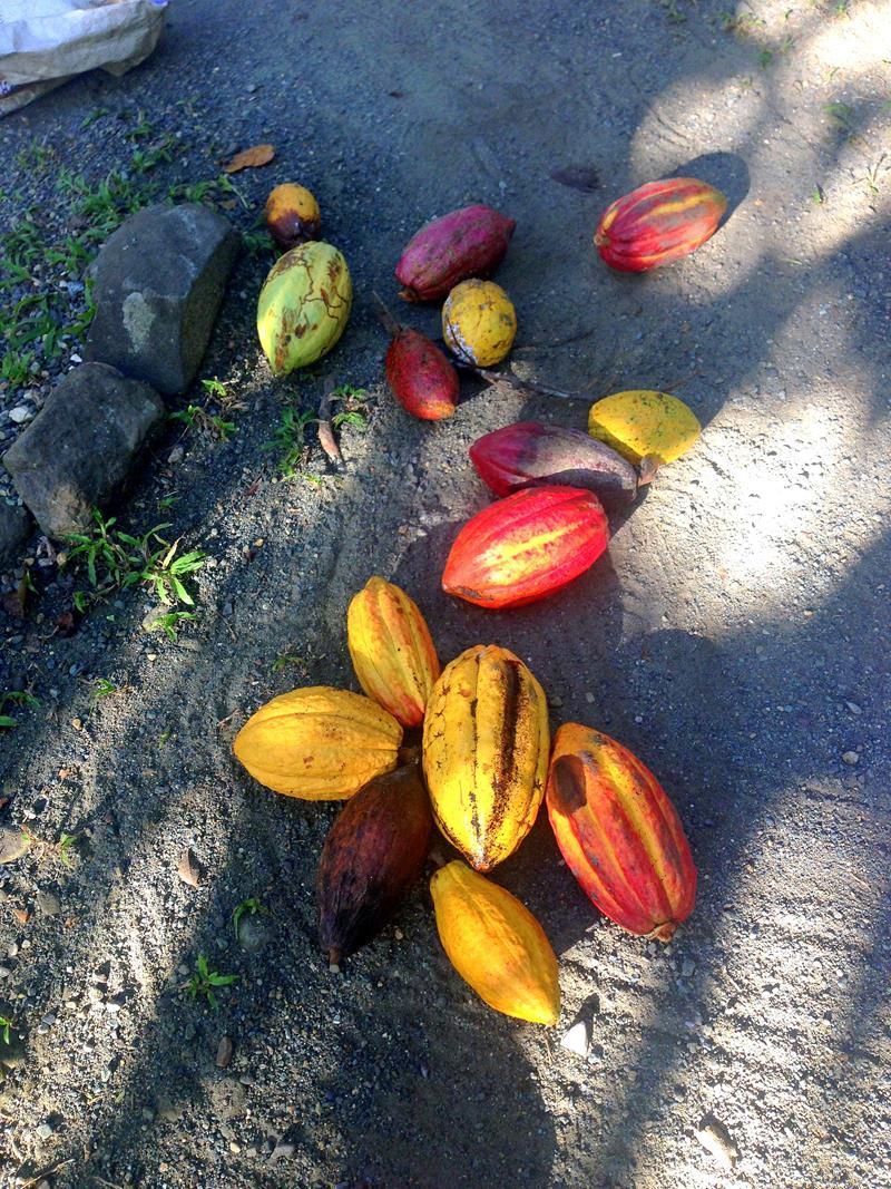Die Eco-Lodge Rancho Don Lulu inmitten einer Schokoladenfarm im Norden der Dominikanischen Republik