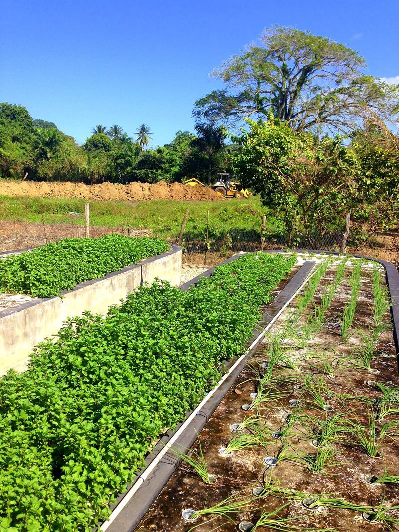 Die Taino Farm, eine organische Eco-Lodge in der Nähe von Cabarete