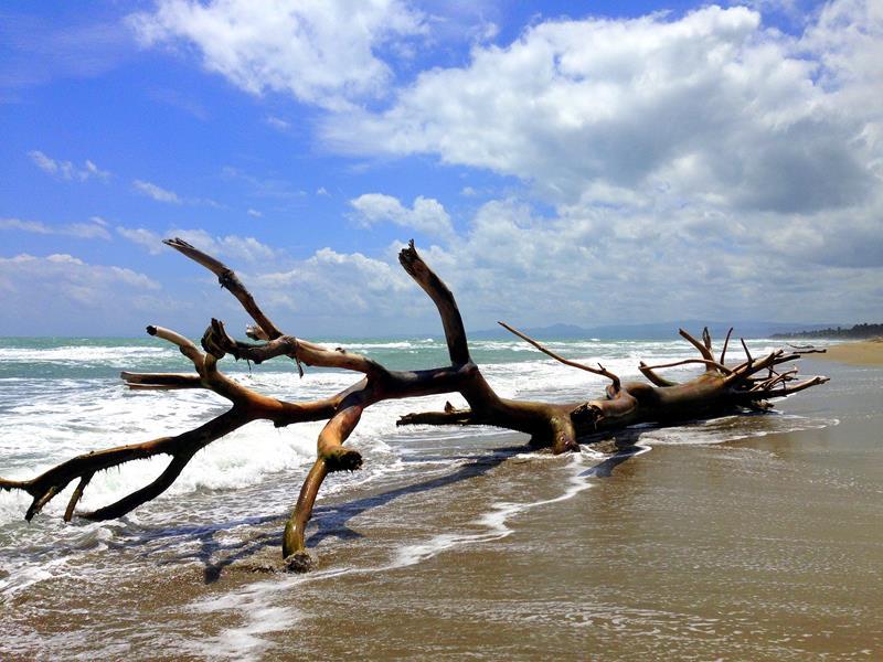 Tolles Fotomotiv am Strand in der Nähe von Cabarete