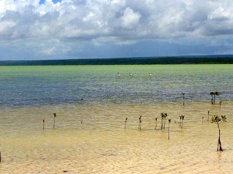 Flamingos in der Laguna Oviedo im Südwesten der Dominikanischen Republik