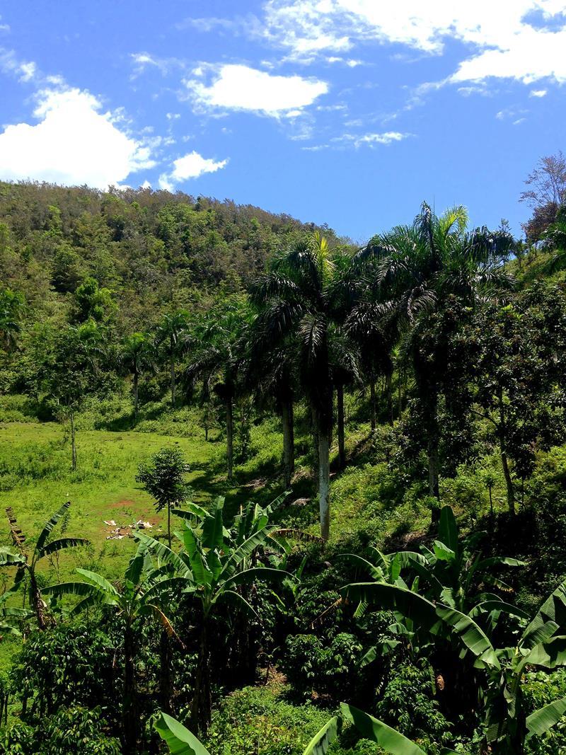 Aussicht über die grüne Vegetation von Samana