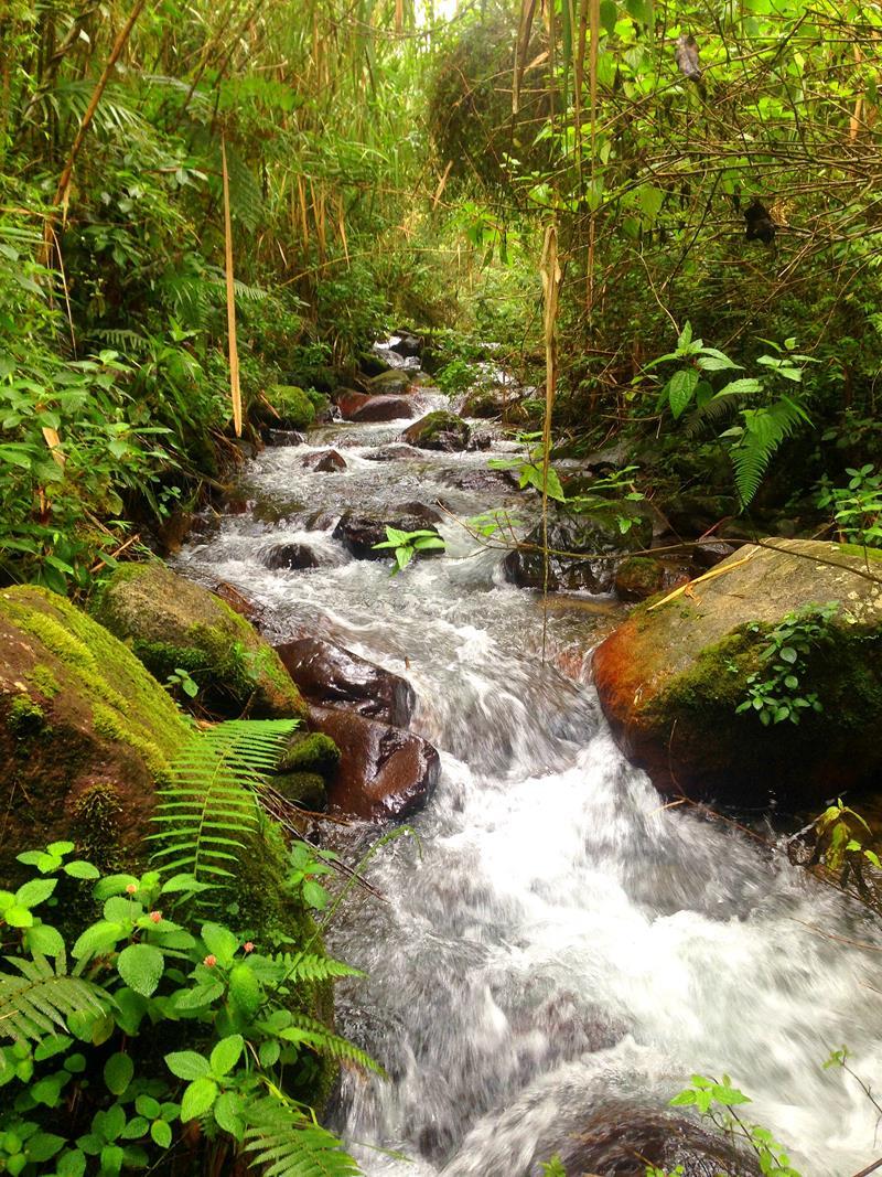 Hübsche Flussläufe im Parque Nacional Armando Bermudez in der Dominikanischen Republik