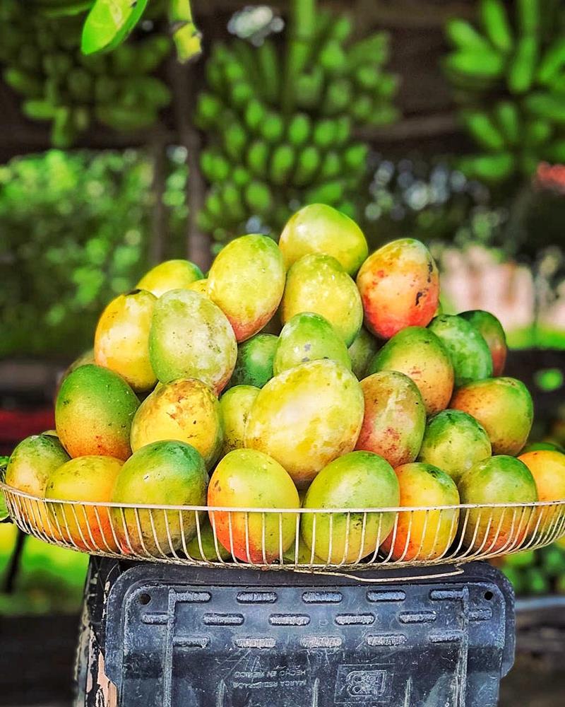 Mangos aus Bani, die Mango-Hauptstadt der Dominikanischen Republik