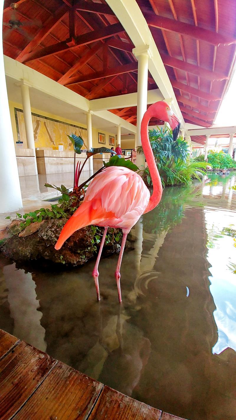 Bunte Flamingos gibt es im Paradisus Punta Cana Resort zu sehen