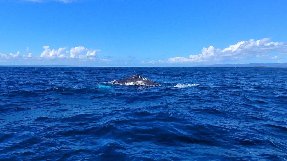 Walbeobachtung in der Bucht von Samaná