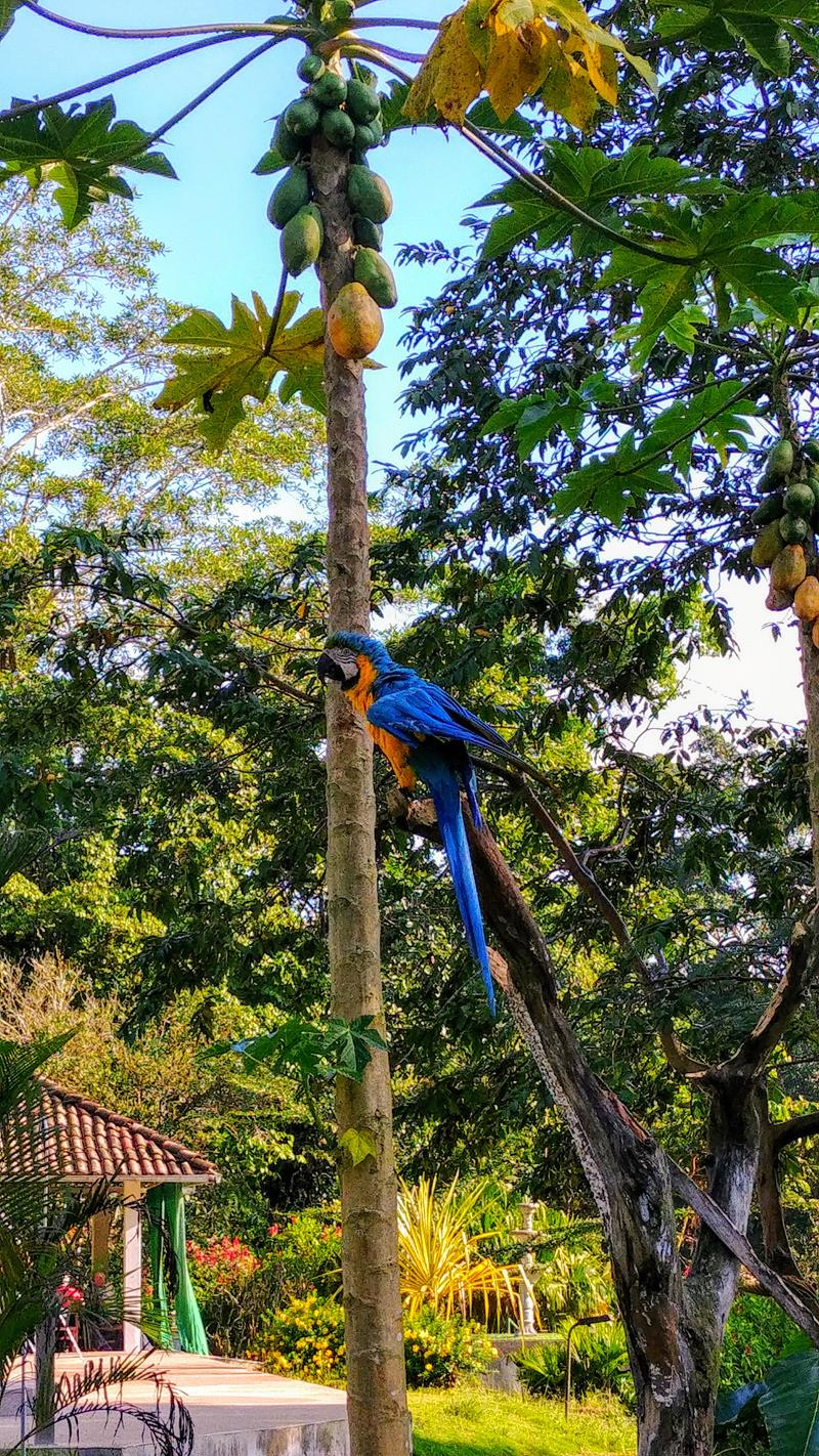Die Lodge El Jardin Aleman in Puerto Misahualli im Amazonasbecken von Ecuador