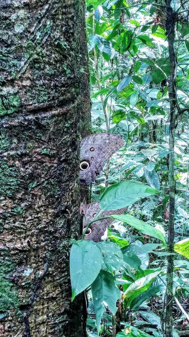 Spannende Dschungel-Welt auf einer Tour am Rio Napo in Ecuador