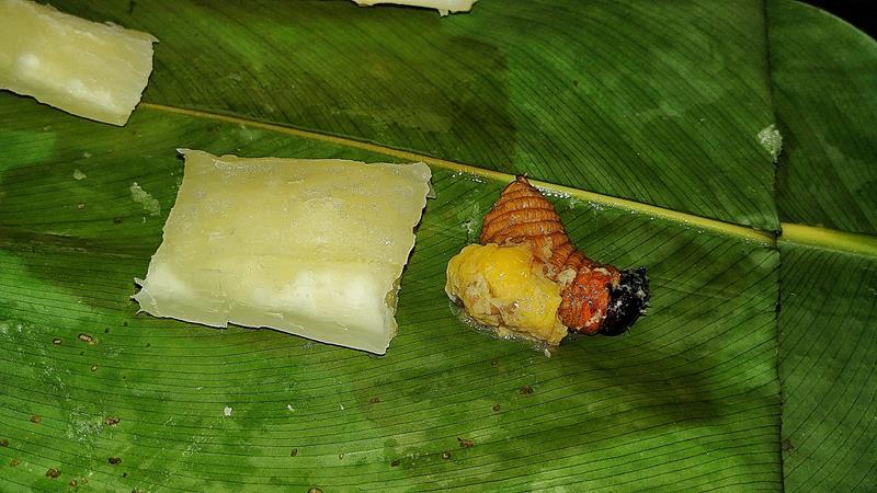 Leckere Köstlichkeiten in Ecuador - gebratene Würmer