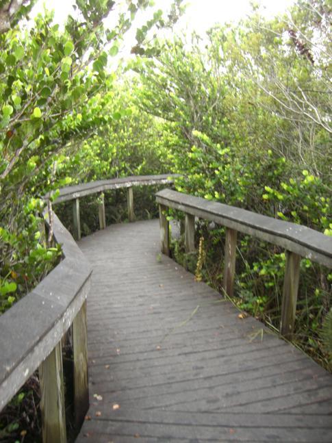 Boardwald in den Everglades am Shark Valley Visitor Center