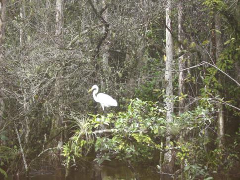 Die beeindruckende Tierwelt der Everglades