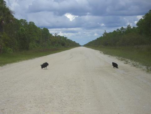 Eine der Dirt Roads durch die Everglades