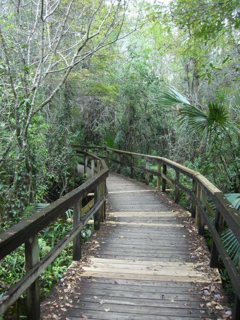 Der Big Cypress Bend Boardwalk am Rande der Everglades