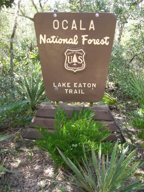 Die Lake Eaton Trails im Herzen des Ocala National Forest